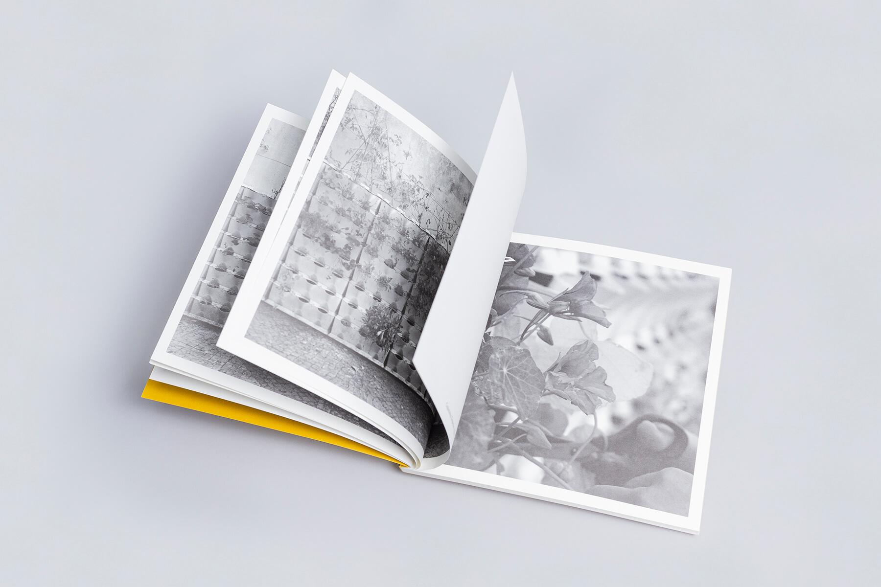 horta vertical dos corucheus fotografia fabio cunha galerias municipais